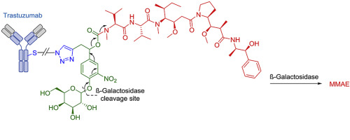 Development and evaluation of β-galactosidase-sensitive antibody-drug conjugates,  Eur. J. Med. Chem., 2017, 142, 376-382.