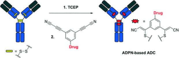 Reduction–rebridging strategy for the preparation of ADPN-based antibody–drug conjugates, Med. Chem. Commun., 2018, 9, 827-830.