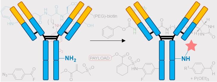 Recent, non-classical, approaches to antibody lysine modification, Drug Discov. Today Technol., 2018, DOI: 10.1016/j.antiviral.2018.04.005.